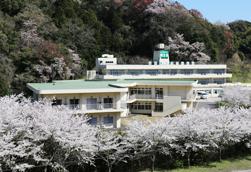 年間行事4月フラワーヒルの桜満開の様子