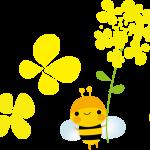菜の花イラスト