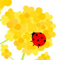 菜の花イラスト3